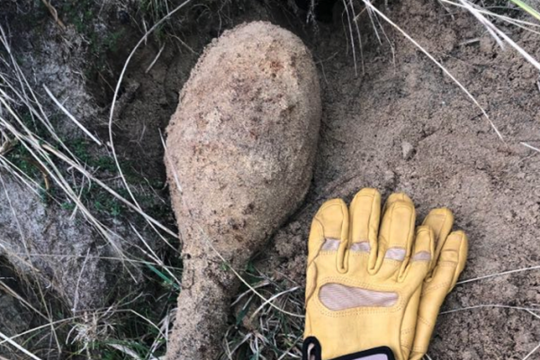 WWII UXO found on a Cornish beach